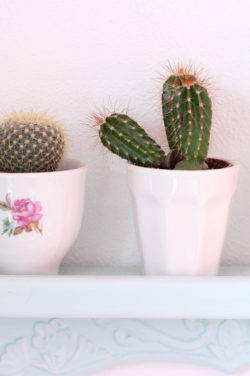 HEMA_CUPS_CACTUS_STYLING_IDEAS