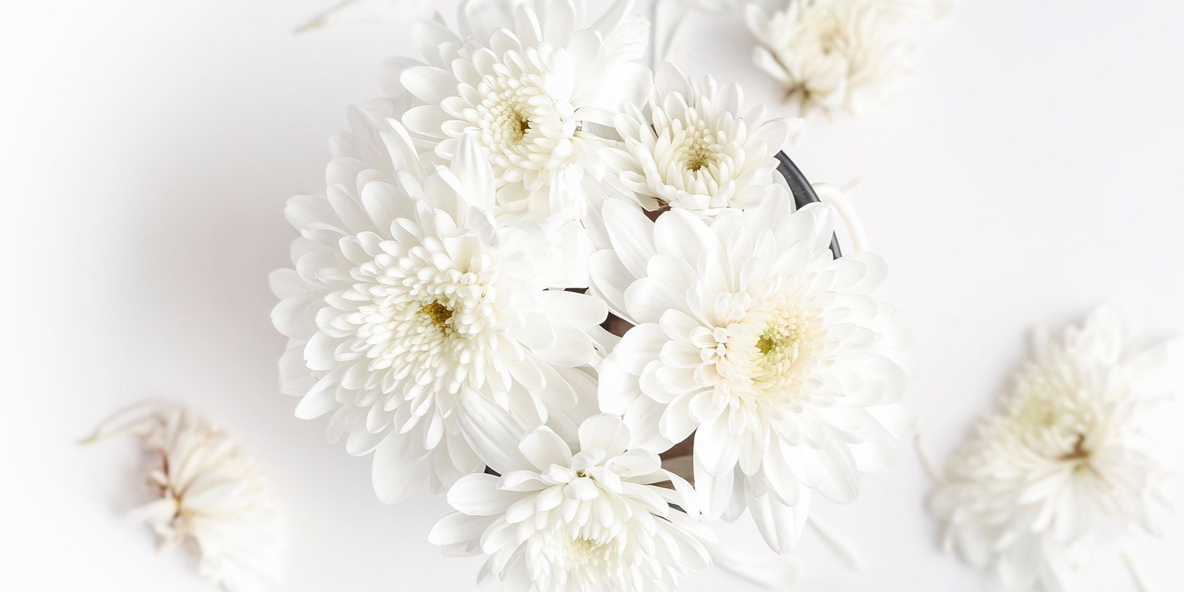 inbloom-white-flowers_01