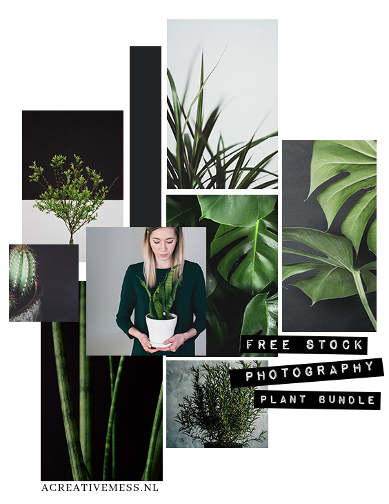 free high quality stock photography plant bundle #01
